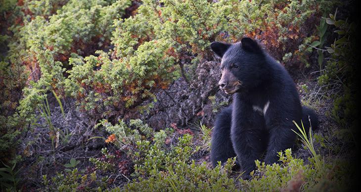 Stations denregistrement ministère des forêts de la faune et des